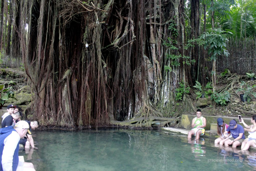 The Old Enchanted Balete Tree
