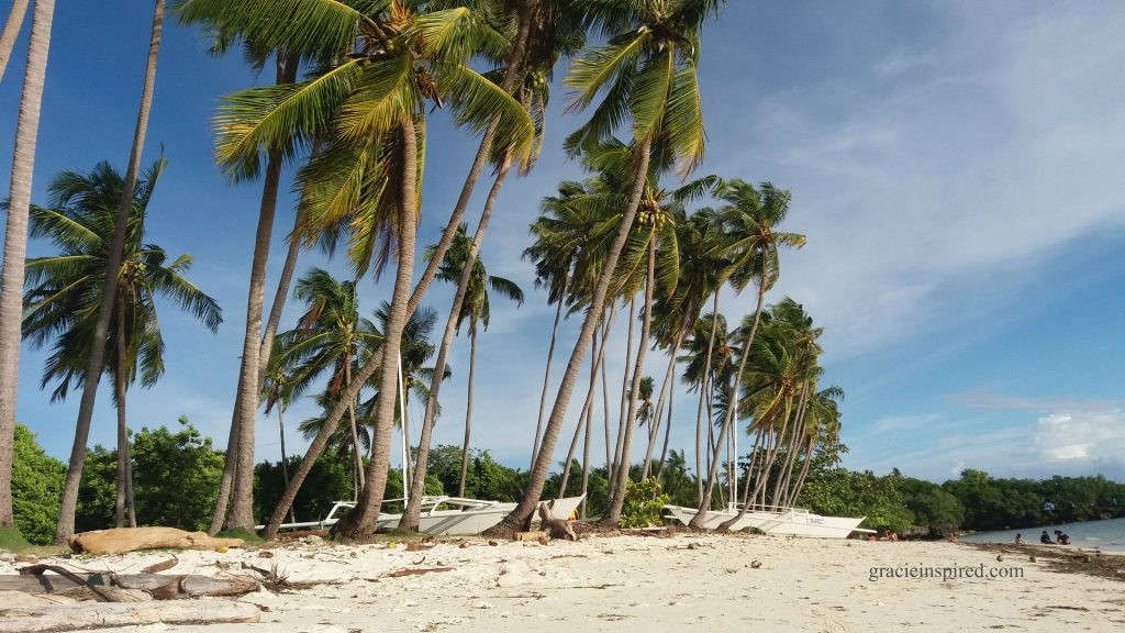 Palm Trees and White-Sand Beach