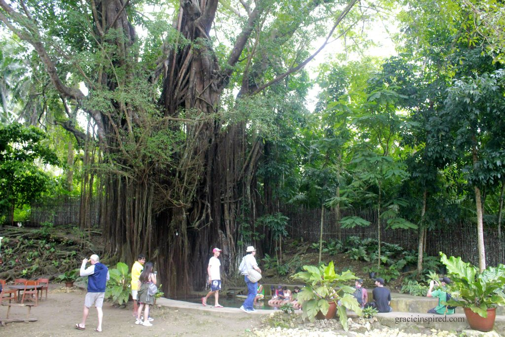 Stop Over for a Fish Spa by the Old Enchanted Balete Tree
